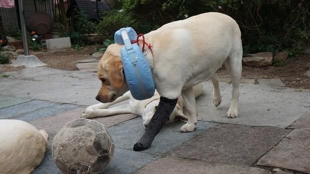 長靴下をはいた犬