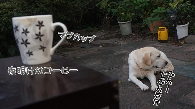 夜明けのコーヒー