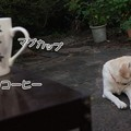 Photos: 夜明けのコーヒー