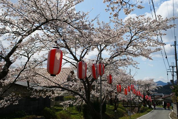 水分れ公園の桜並木_02