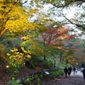 森林植物園 ライトアップ散策_01