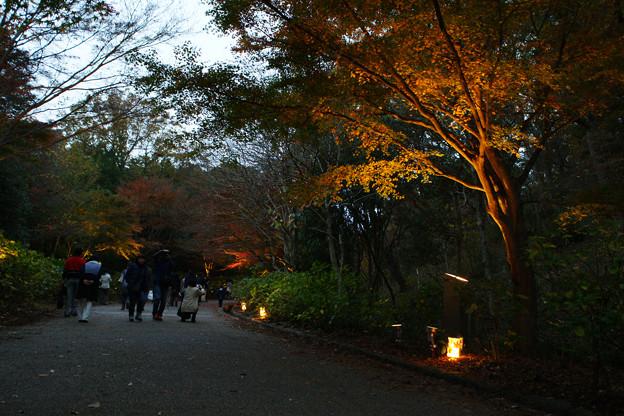 Photos: 森林植物園 ライトアップ散策_02