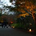 森林植物園 ライトアップ散策_02