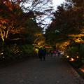 森林植物園 ライトアップ散策_03