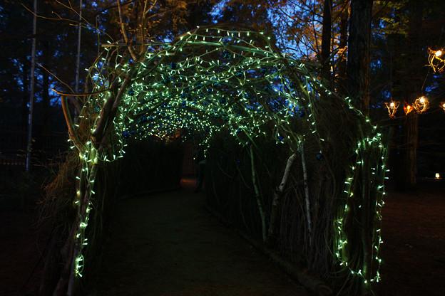 Photos: 森林植物園 光のトンネル