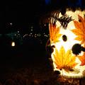 Photos: 森林植物園 灯ろう