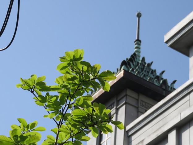 新緑とモダン寺
