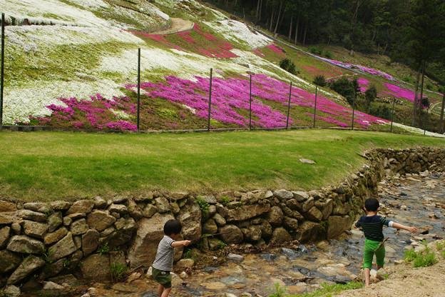 芝桜と清流_01