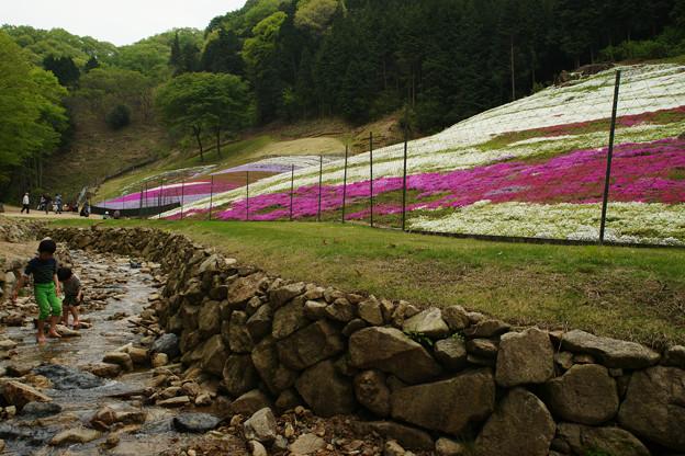 芝桜と清流_03
