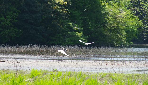 鴨池の野鳥を撮影_01