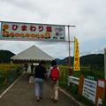 ひまわり畑 入口_02
