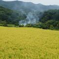 農村の野焼き