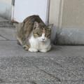 HAT脇の浜の猫_01