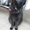 HATの黒猫_01
