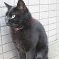 HATの黒猫_03