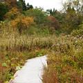 秋草の植物園_02