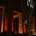 38番館 街路樹のライトアップ