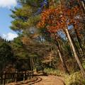 Photos: 香りの道 散策_04
