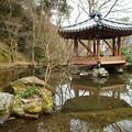Photos: 六角亭と池_01