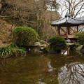 Photos: 六角亭と池_02