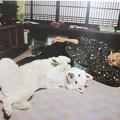 Photos: 『のと』の白い犬_01