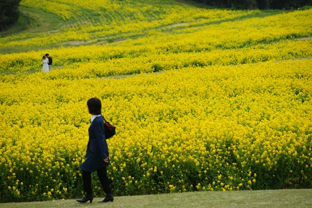 花さじき 一面の菜の花_08