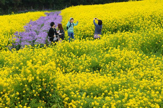 花さじき 菜の花散策_02
