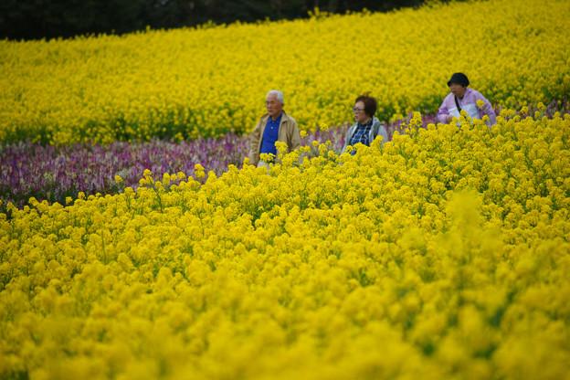 花さじき 菜の花散策_03