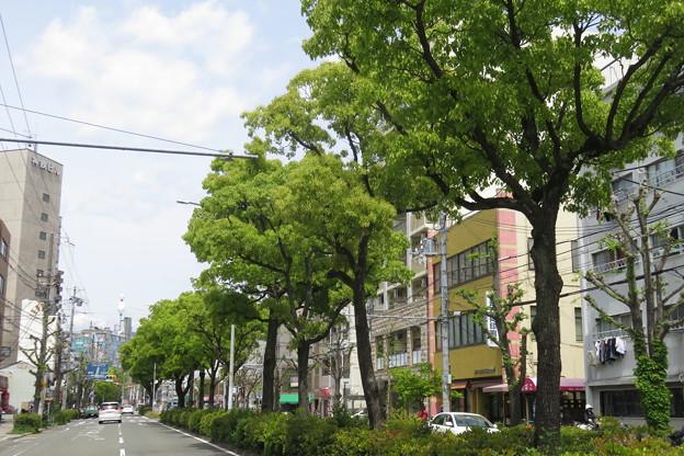 新緑の街路樹_02