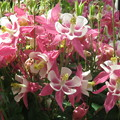 Photos: 街角の花