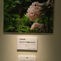 Photos: フォトコンテスト_弓削牧場賞