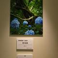 Photos: フォトコンテスト_森林植物園 園長賞