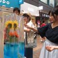 Photos: 三宮センター街 氷柱_05