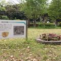 写真: 発掘旧墓 壺棺墓