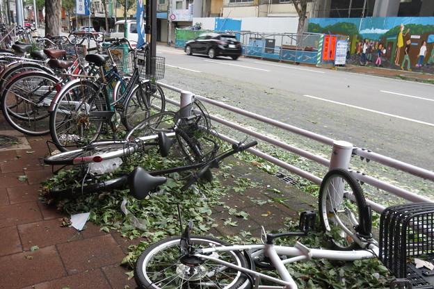 台風21号の去った跡_02