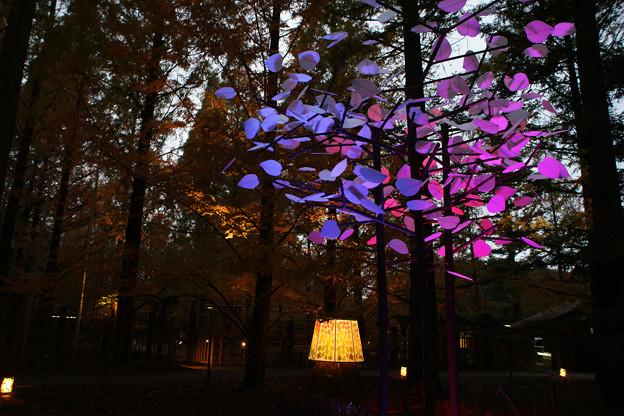 森林植物園 ライトアップ_01