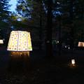 森林植物園 ライトアップ_02