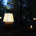 Photos: 森林植物園 ライトアップ_02