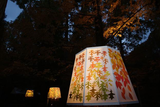森林植物園 ライトアップ_03