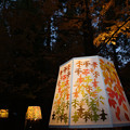 Photos: 森林植物園 ライトアップ_03