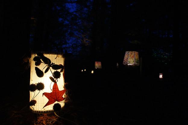 森林植物園 ライトアップ_04