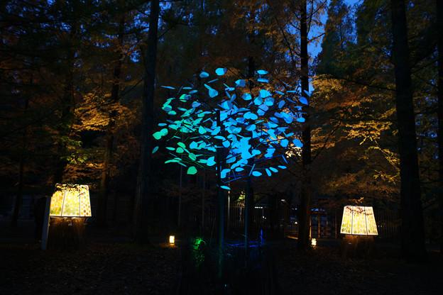 森林植物園 ライトアップ_05