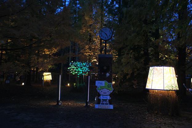 森林植物園 ライトアップ_06