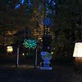Photos: 森林植物園 ライトアップ_06