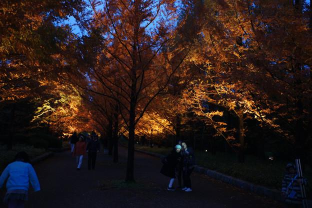 メタセコイヤ並木を歩く_01