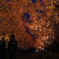 メタセコイヤ並木を歩く_09