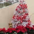 デュオ神戸 クリスマス_01