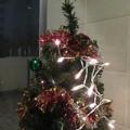 ポートビレッジ クリスマスツリー_03