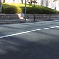 神戸地方裁判所 樹木の影_01