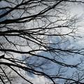 早春の森林植物園_01